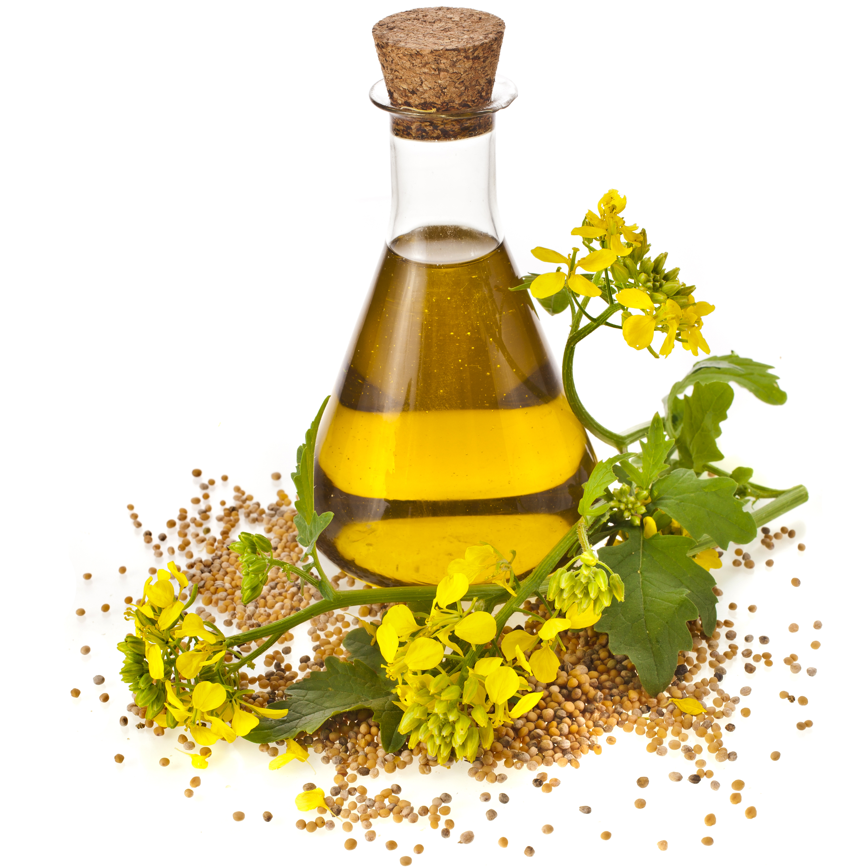 canola oil vicky pearl